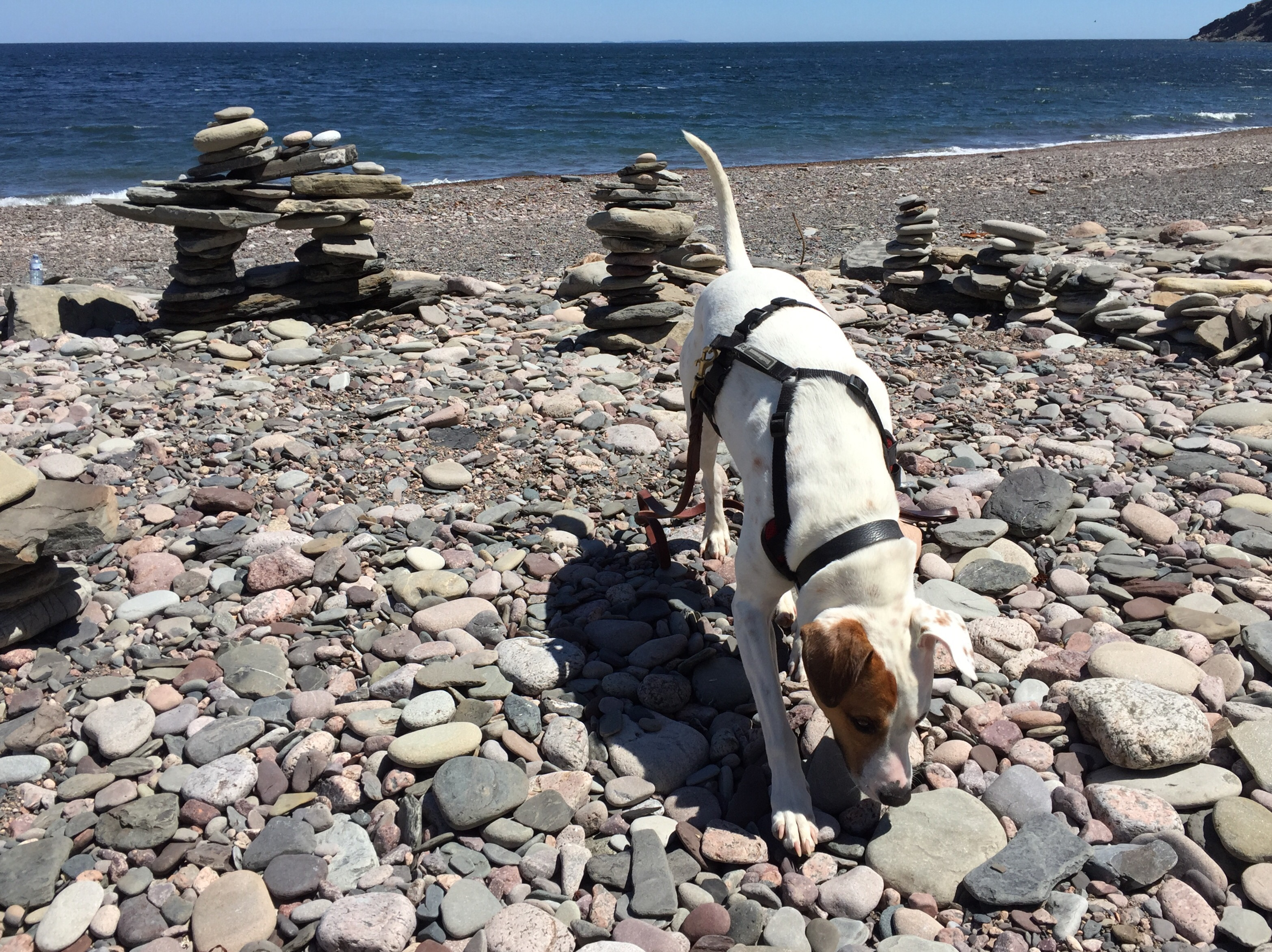 dog inspects stone cairns at Meat Cove near Cape Breton National Park