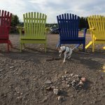 happy dog inspects giant beach chairs at Parrsboro, Nova Scotia