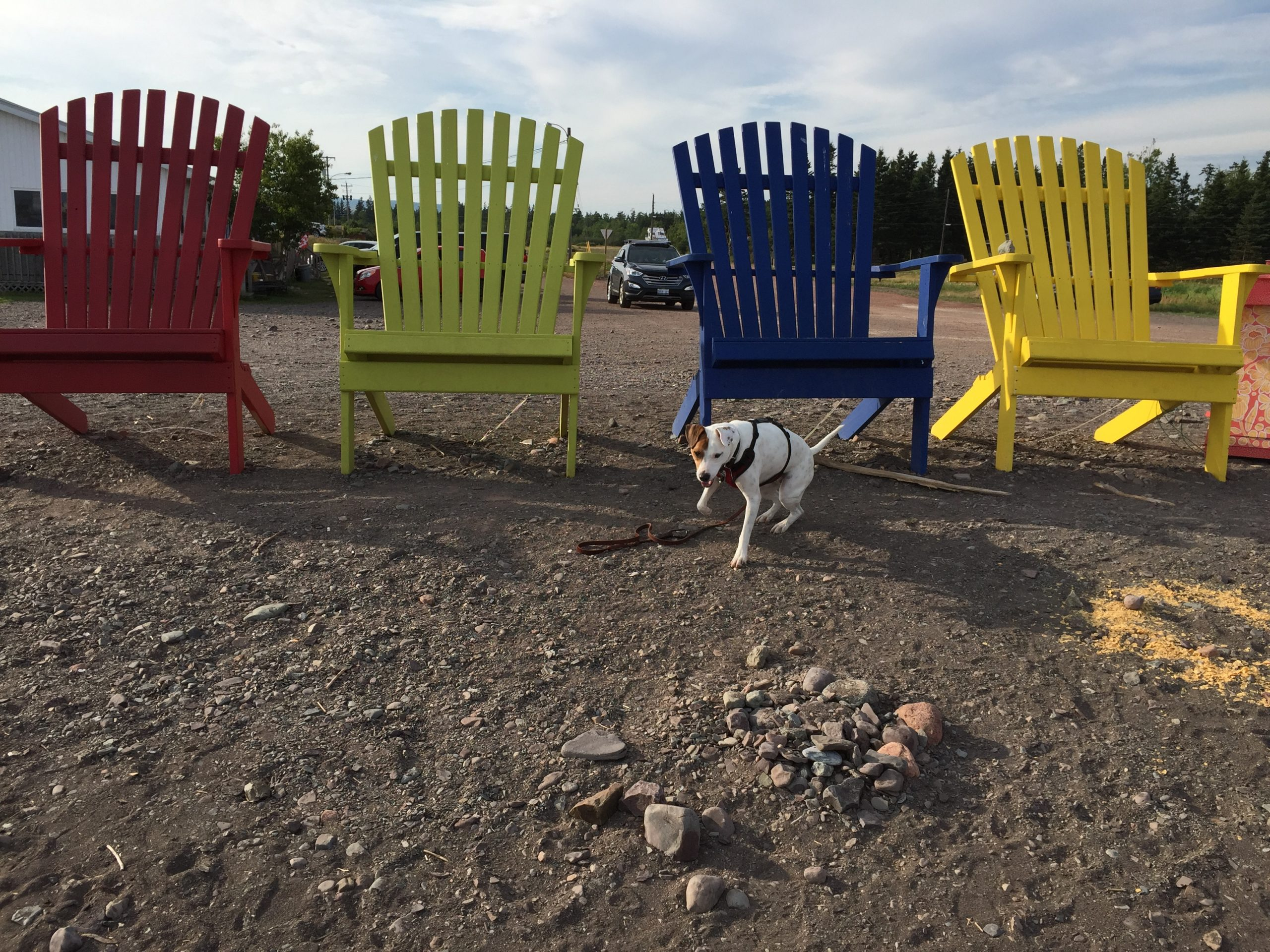 happy dog inspects giant beach chairs at Parrsboro, Nova Scotia