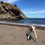 happy dog runs on beach with leash flying behind
