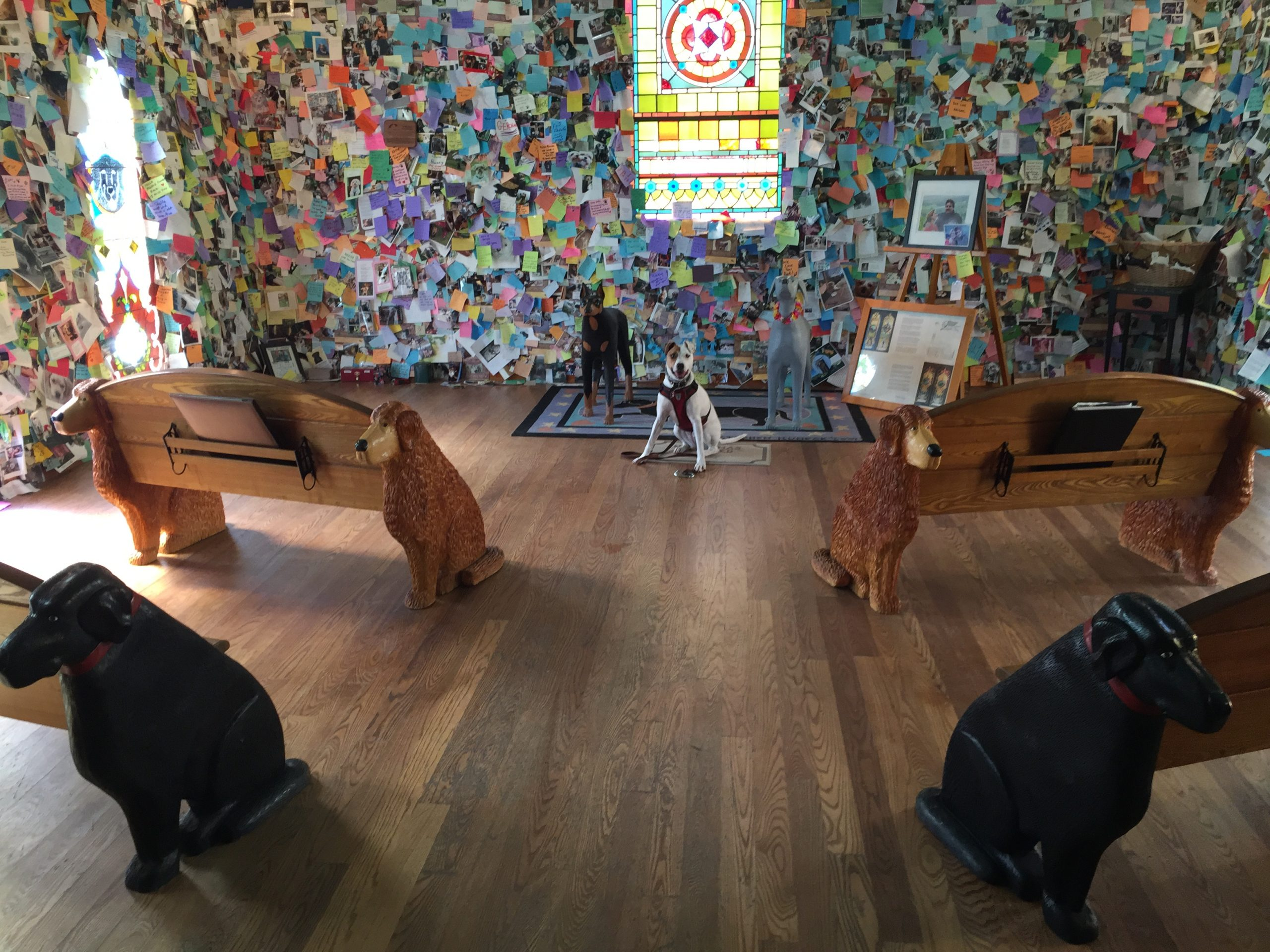 dog sits in front of church pews in the Dog Chapel at Dog Mountain