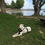 dog sitting by a picnic bench near Cayuga Lake