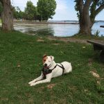 dog sitting by a picnic bench near Cayuga Lake