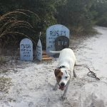 a dog frolics in front of some handmade halloween decorations