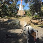 a dog walks in front of a statue of Chief Tomokie