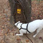 """A dog sniffs around a """"gnome home"""" built into a tree"""