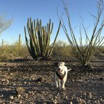 Rover the dog at Organ Pipe Cactus National Monument