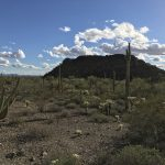 Saguaro cacti in front of a lone mountain throw long shadows toward an organ pipe cactus