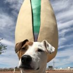 dog sitting in front of giant pistachio statue
