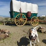 Rover the adventuring dog stands in front of a covered wagon replica