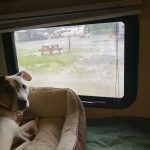 A dog looks sadly out the window at another rainy day in Valdez