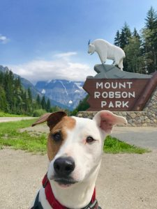Rover, the Vagabond Dog, sits in front of the Mount Robson Provincial Park portal. The portal features the park name, with a statue of a mountain goat standing on top of a rocky ridge.