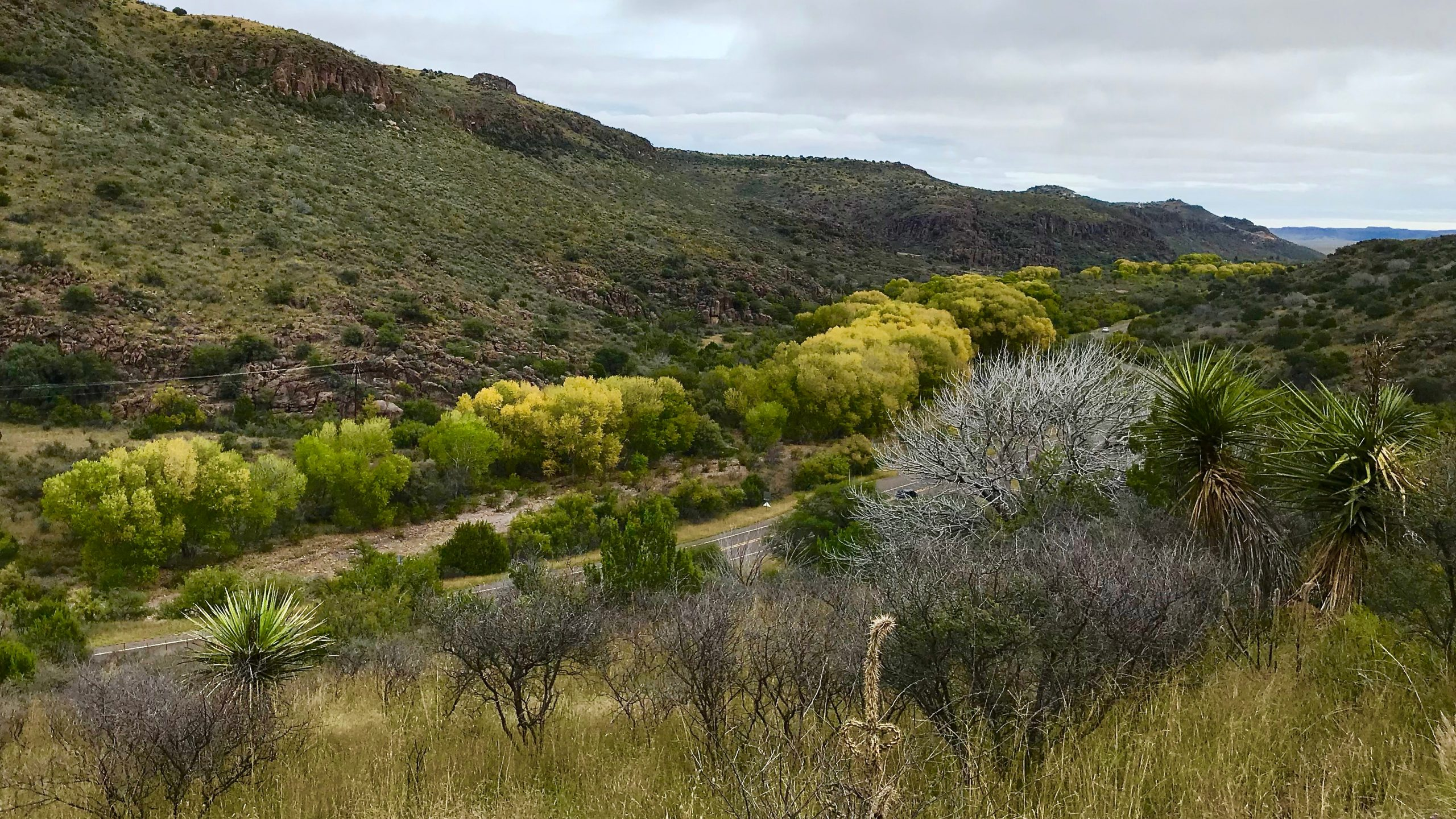 The Davis Mountain Scenic Loop follows alongside Limpia Creek through Limpia Canyon near Fort Davis, Texas. Cottonwood trees along the creek begin to show their autumn colors.