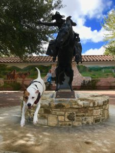 A statue of a cowboy with a lariat on a rearing horse appears to be herding Rover the Vagabond Dog